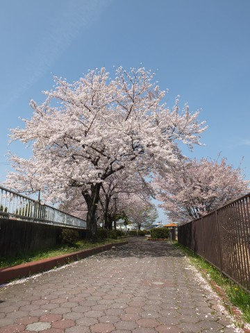 Inuyama130408.jpg