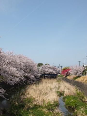 Inuyama130403.jpg