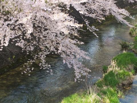 Inuyama130404.jpg