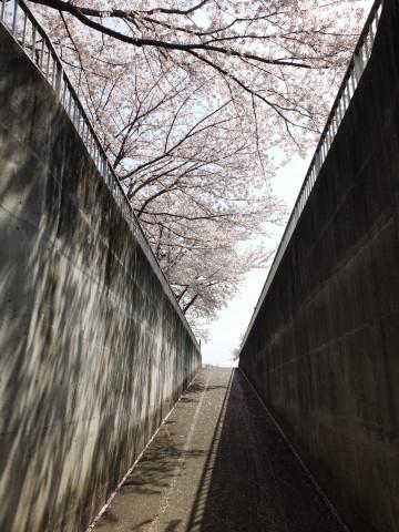 Inuyama130407.jpg